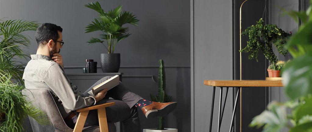 Pflegeleichte Zimmerpflanzen für den Mann als Single | © Photographee.eu - stock.adobe.com