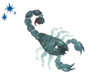 Sternzeichen für Männer Skorpion | © tada - stock.adobe.com