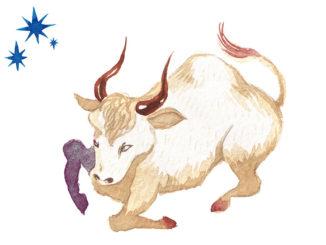 Sternzeichen für Männer Stier | © tada - stock.adobe.com